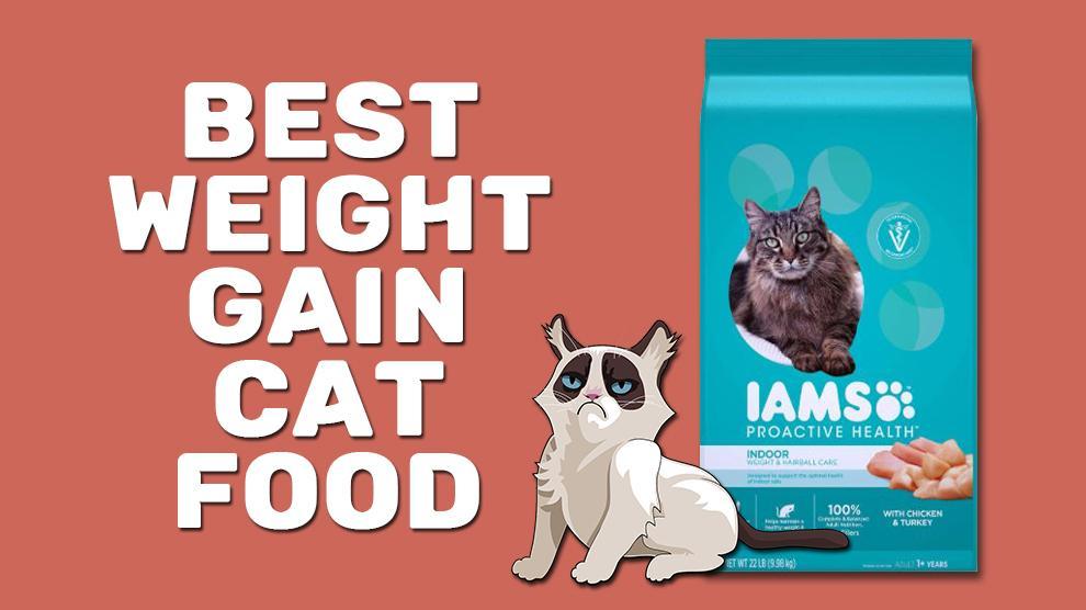 Best Weight Gain Cat Food