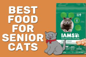 Best Food For Senior Cats