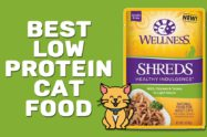Best Low Protein Cat Food