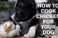 How To Cook Chicken For Your Dog