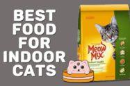 Best Food For Indoor Cats