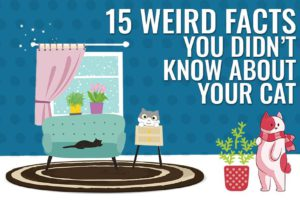 Weird Facts You Didn't Know About Your Cat