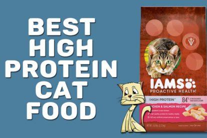 Best High Protein Cat Food