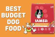 Best Budget Dog Food
