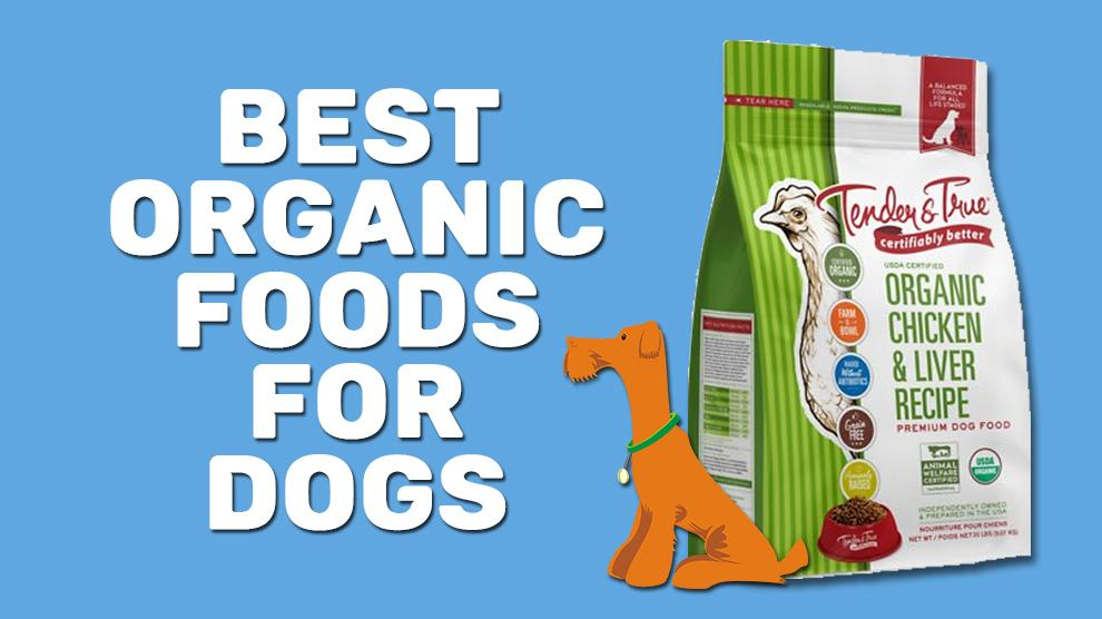 Best Organic Foods For Dogs