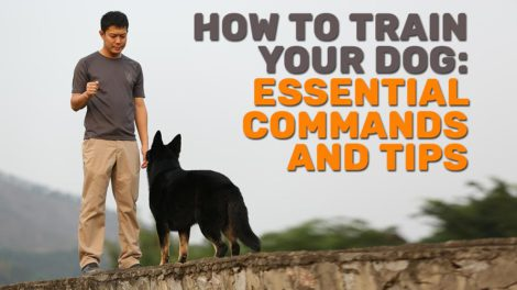 How To Train Your Dog Essential Commands And Tips