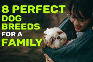 Dog Breeds For A Family