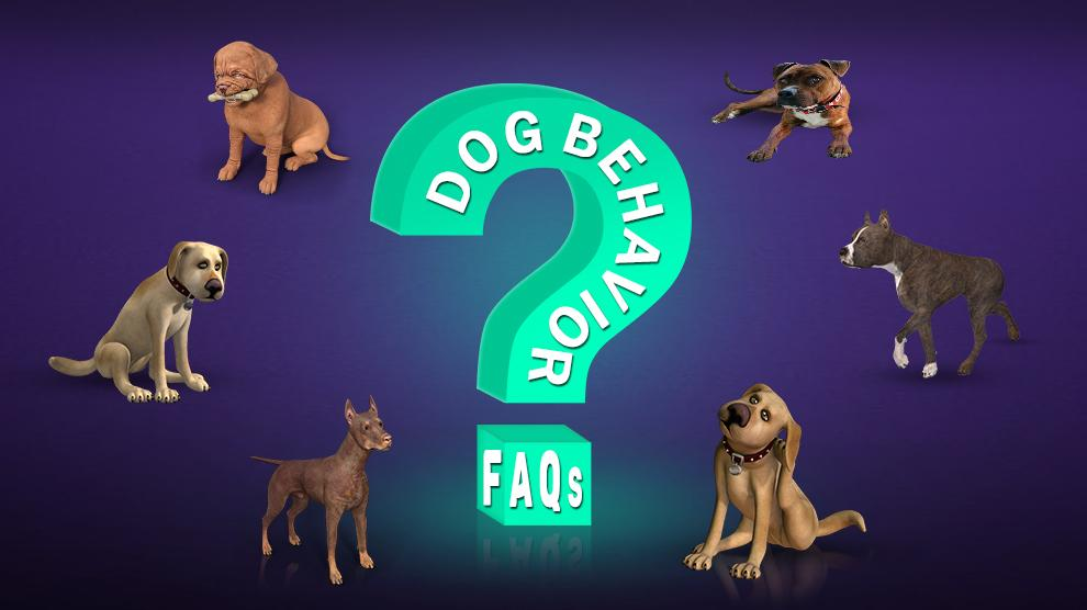 Dog Behavior FAQs