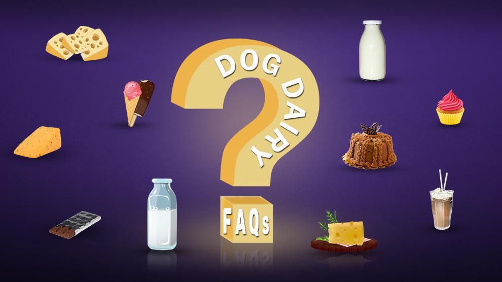 Dog Dairy FAQs