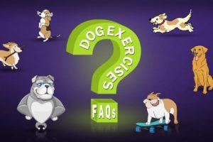 Dog Exercises FAQs