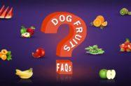 Dog Fruits FAQs