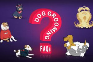 Dog Grooming FAQs