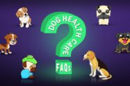 Dog Health Care FAQs