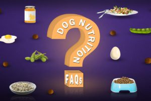 Dog Nutrition FAQs