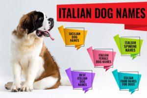 Italian Dog Names