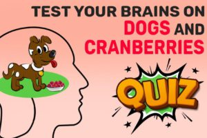 Can Dogs Eat Cranberries Quiz