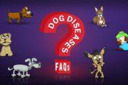 Dog Diseases FAQs