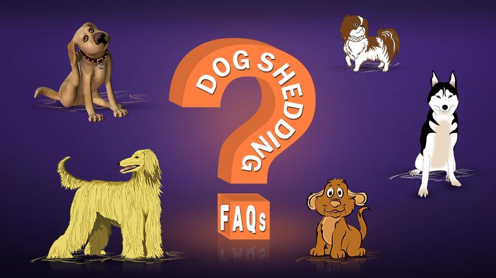 Dog Shedding FAQs