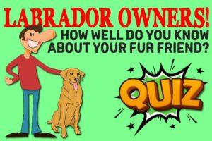 English Labrador Quiz