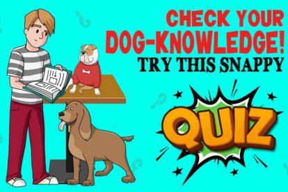 Dog Knowledge Quiz