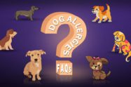 Dog Allergies FAQs