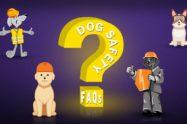 Dog Safety FAQs