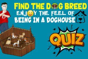 Find The Dog Breed Quiz