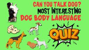 Dog Body Language Quiz