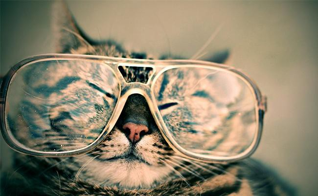 cats-have-a-limited-color-vision