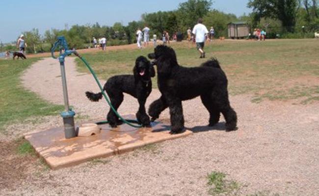 doggies-family
