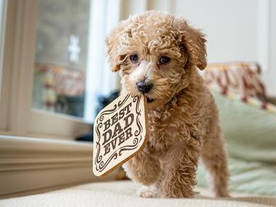cavapoo-dog-breeds-for-a-family