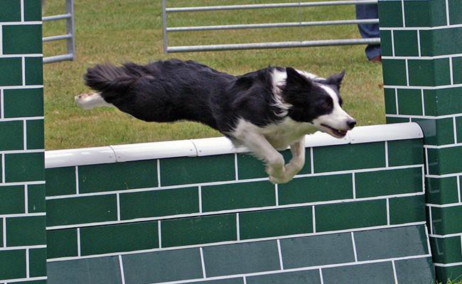 how-to-find-agility-training-right-for-your-dog
