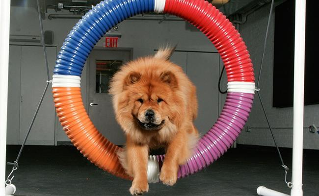 why-is-dog-agility-training-good