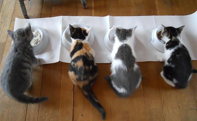 feeding-your-pet