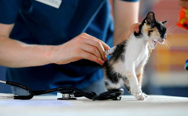 make-preventive-basic-cat-care-a-priority