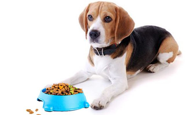 beagle-lab-mix-foods
