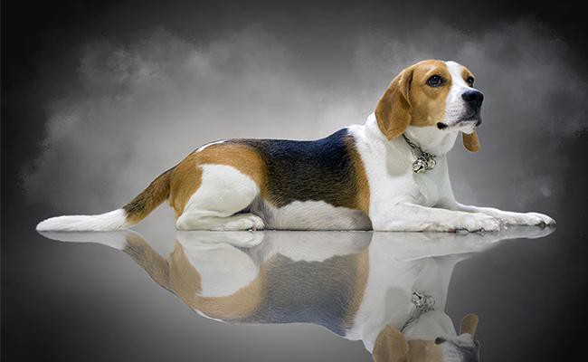 male-beagle-names