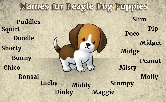 best-names-for-your-beagle-dog-puppies