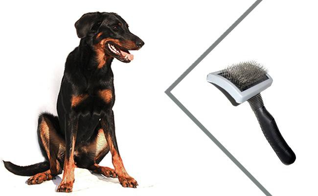 beauceron-dog-grooming-and-shedding