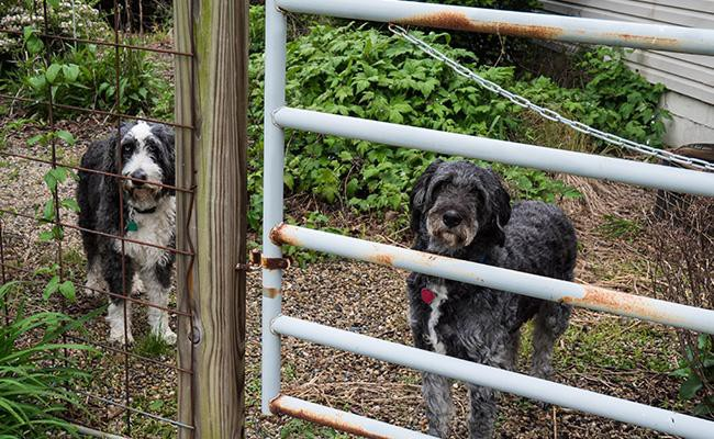 what-you-know-about-puppy-farm