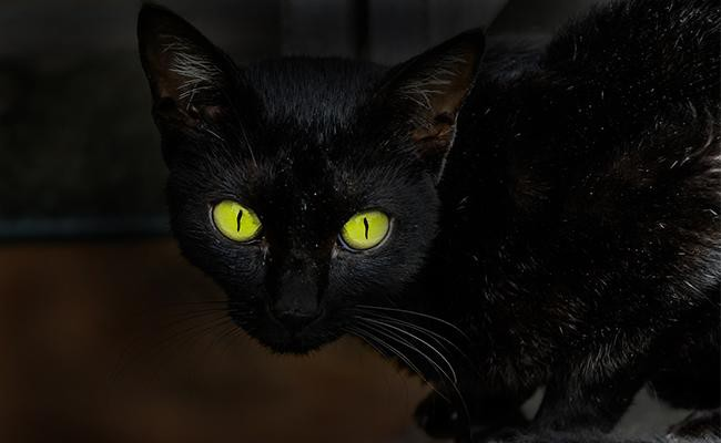 black-cat-names-with-green-eyes