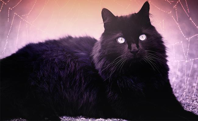 halloween-names-for-black-cats