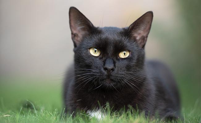 male-black-cat-names