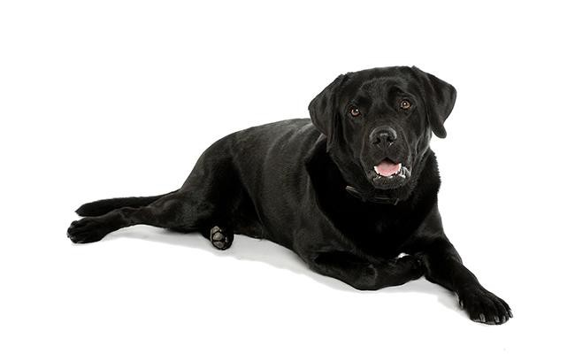 female-black-dog-names