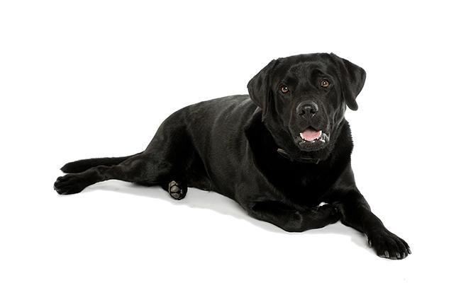 female-black-dog-names
