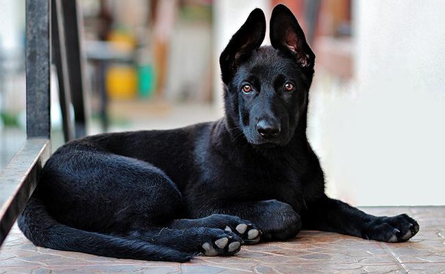 male-black-dog-names