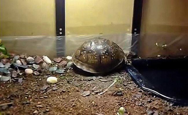 enclosure-box-turtle-care