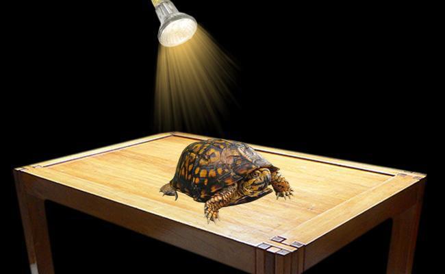 lighting-box-turtle-care