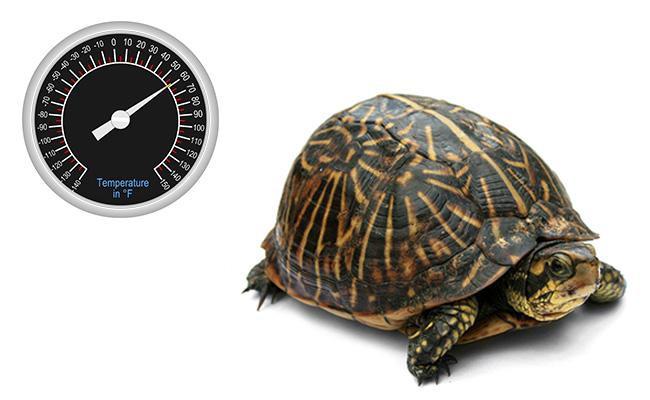 temperature-box-turtle-care