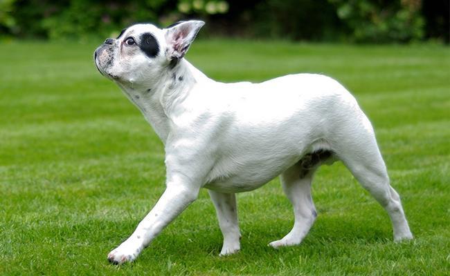 funny-bulldog-names